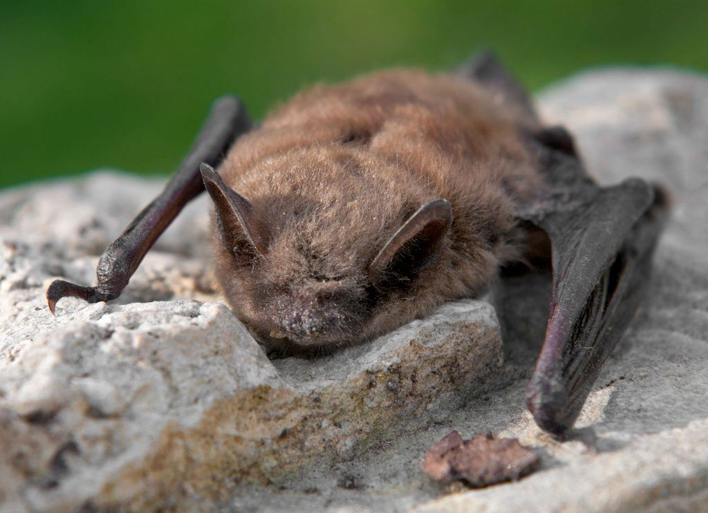 The Smells that bats don't Like