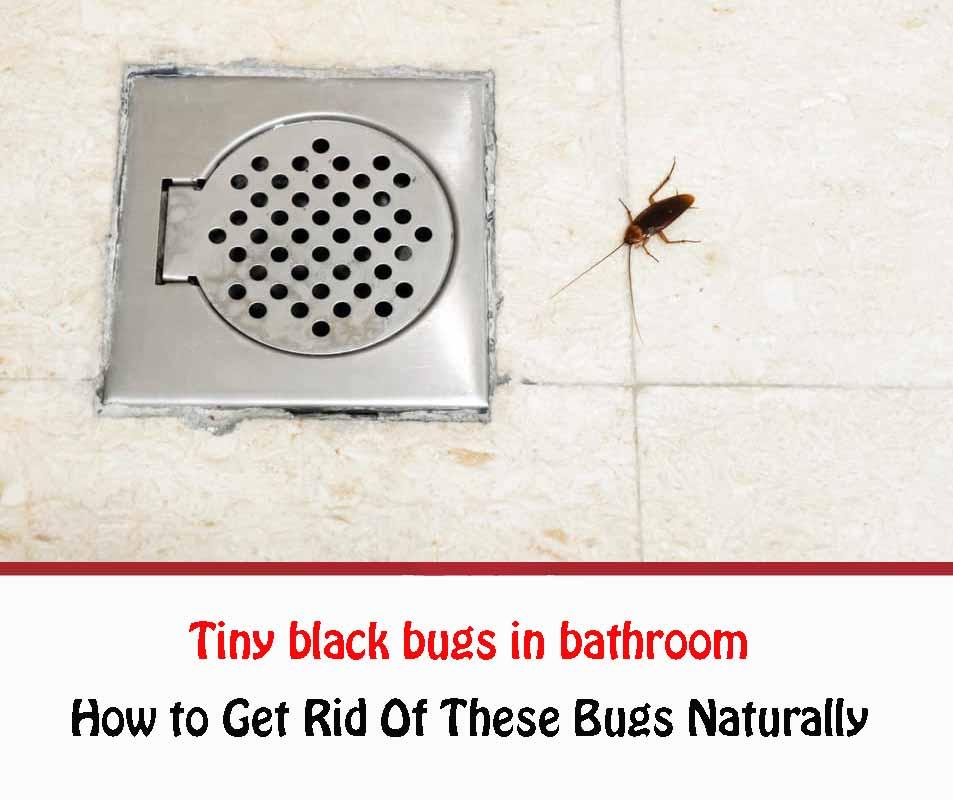 Tiny black bugs in bathroom