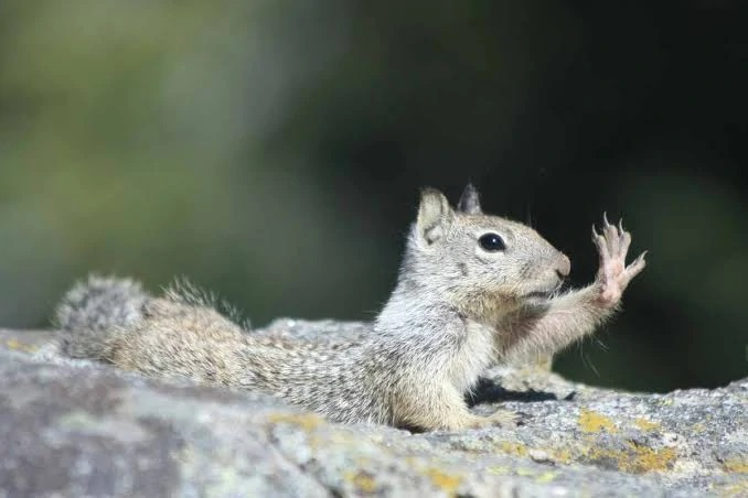 What Are the Different Types of Squirrel Poison