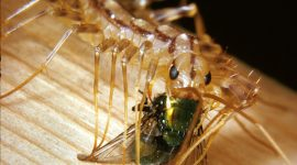 What Do Centipedes Eat?