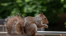 Top 110 Best Squirrel Poisons Guides in 2021