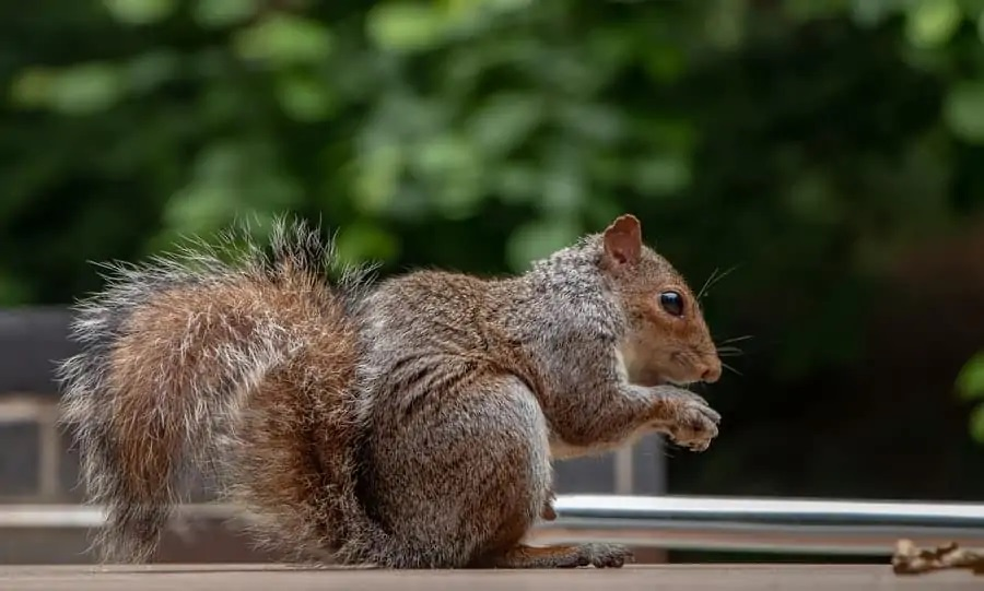 What Do You Need to Know Before Using the Squirrel Poison