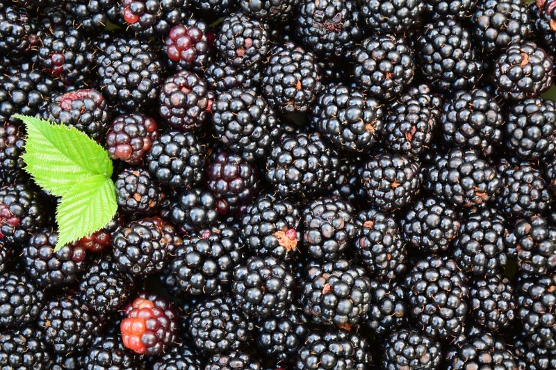 What to spray on blackberries