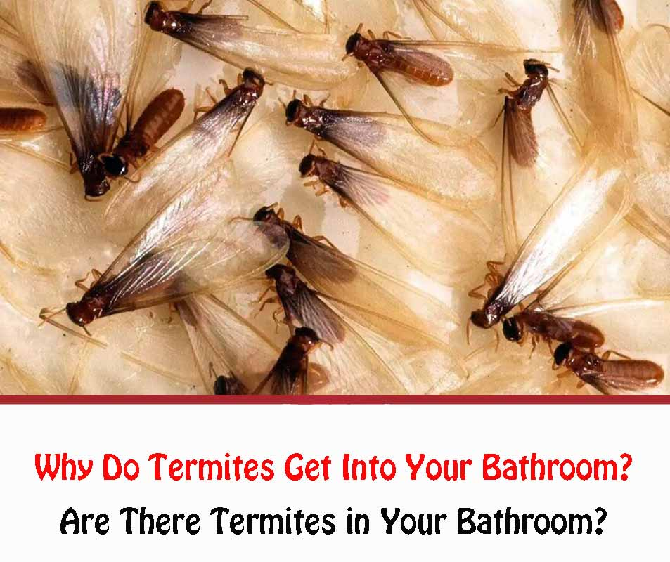 Why Do Termites Get Into Your Bathroom