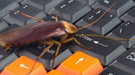 Roaches in TV: How to Get Roaches out of TV