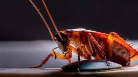 Do Cockroaches Crawl On You At Night?
