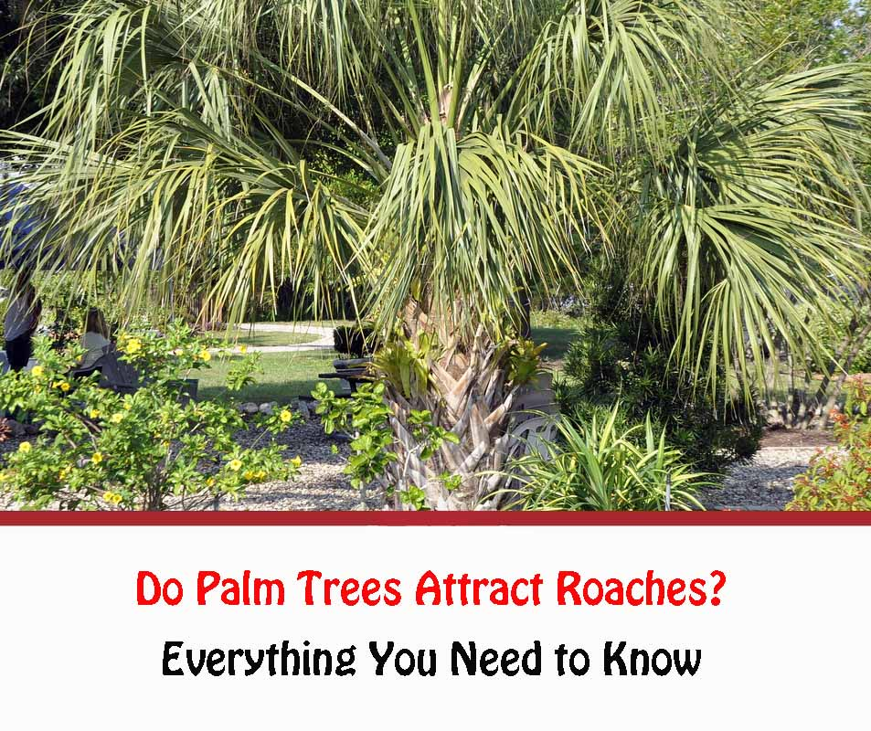 Do Palm Trees Attract Roaches