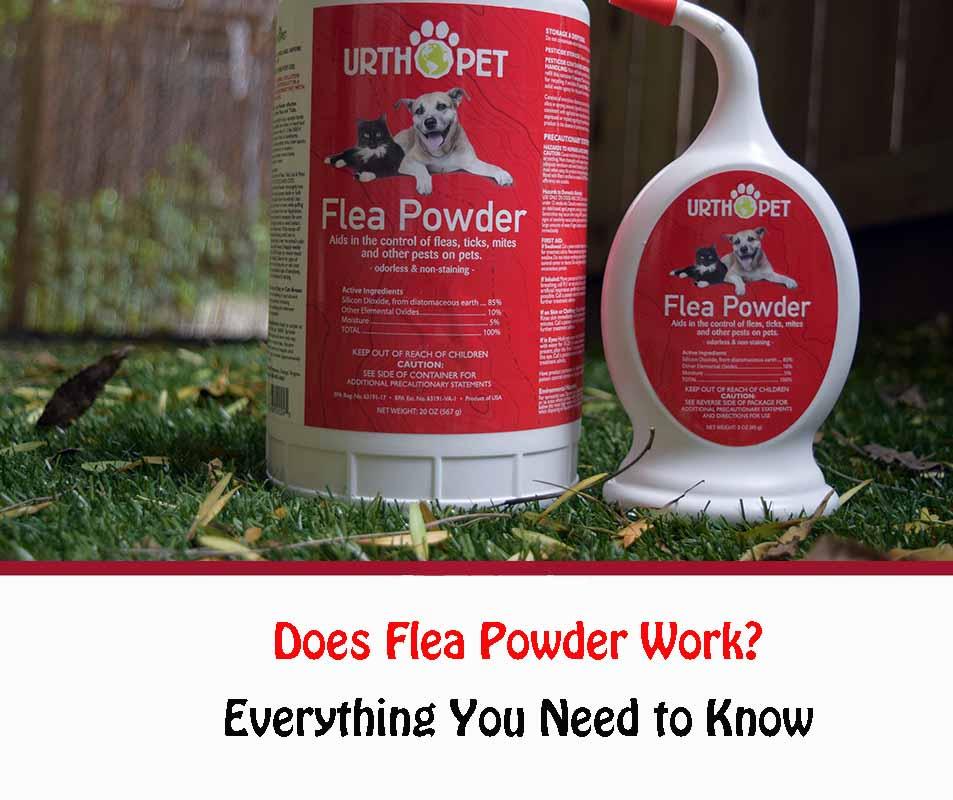 Does Flea Powder Work?