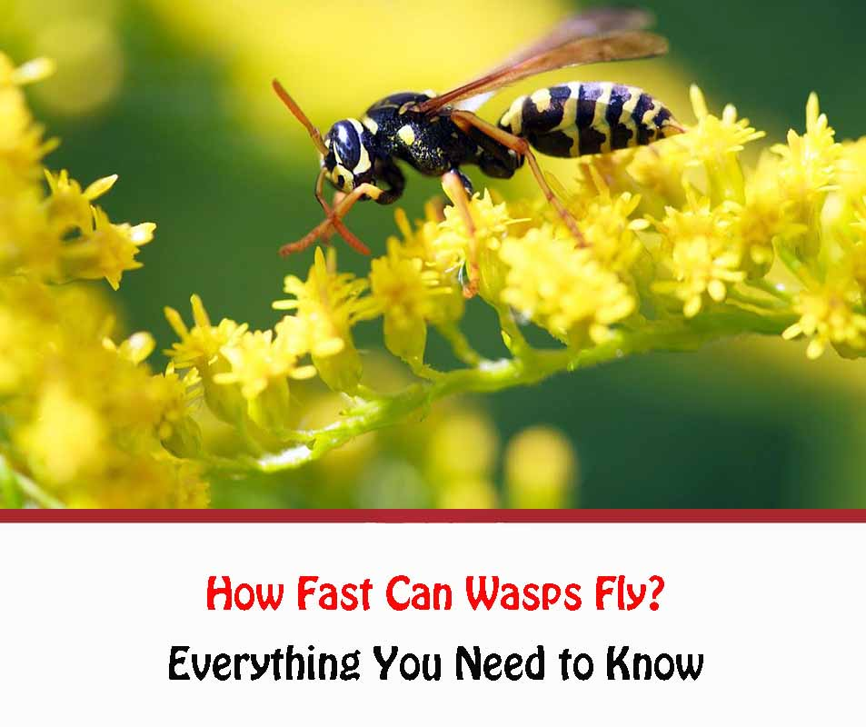 How Fast Can Wasps Fly