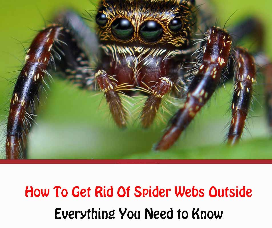 How To Get Rid Of Spider Webs Outside