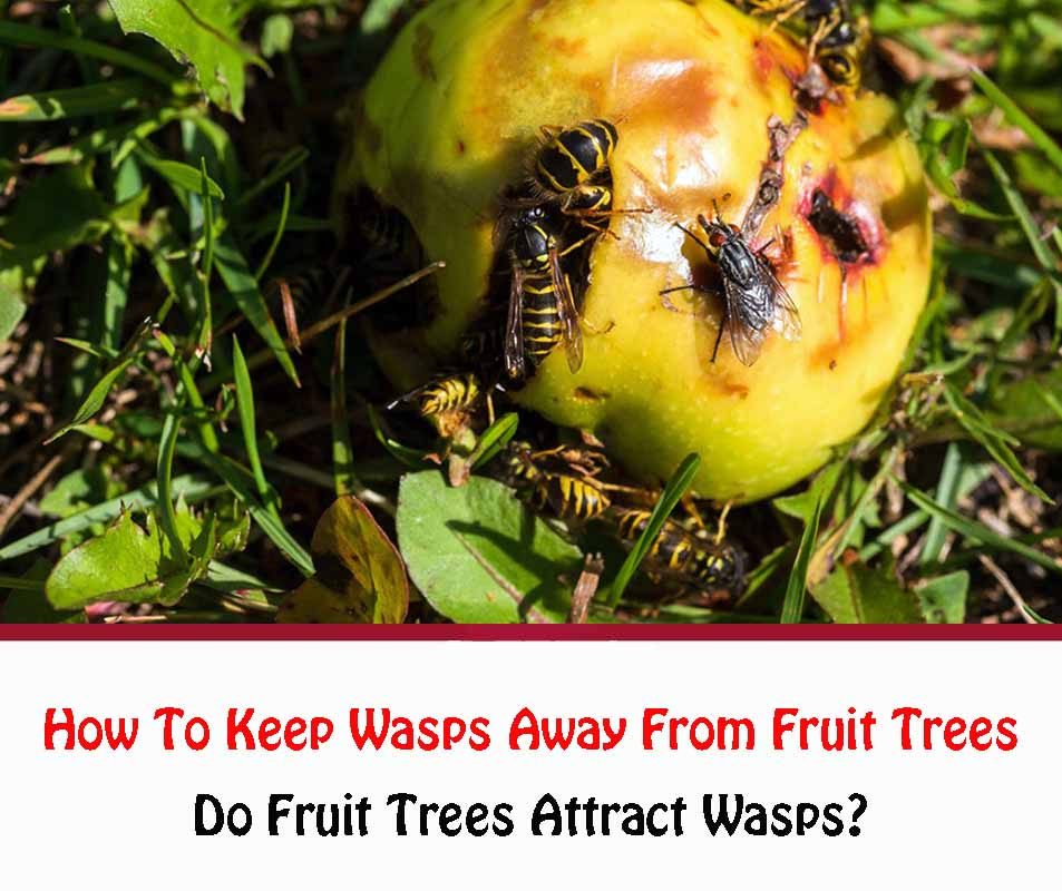 How To Keep Wasps Away From Fruit Trees