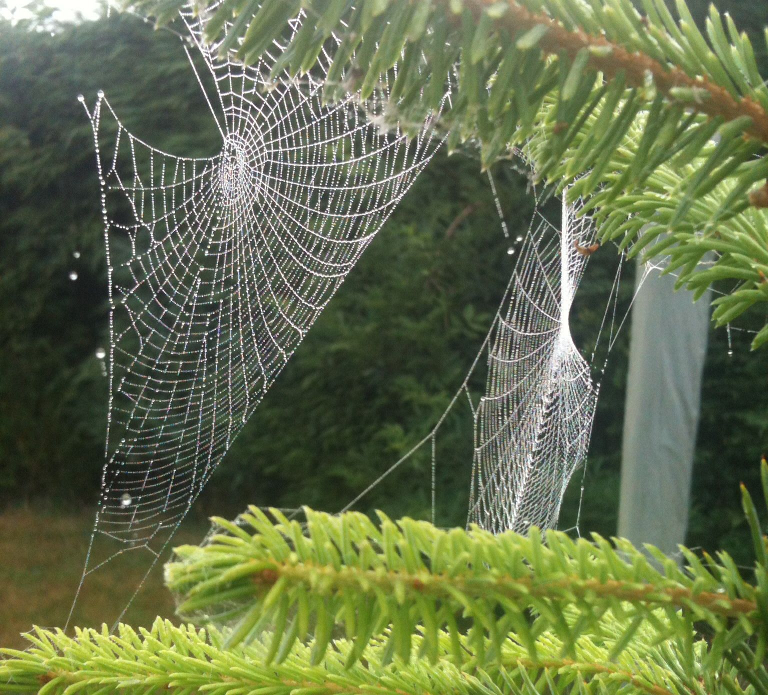 How To Prevent Cobwebs From Reoccurring