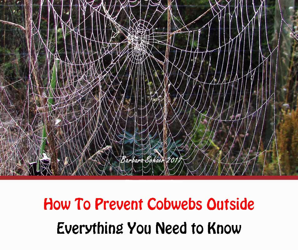 How To Prevent Cobwebs Outside