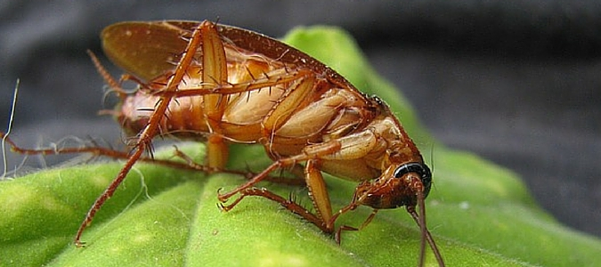 How to Eliminate Cockroaches In the Palm Trees