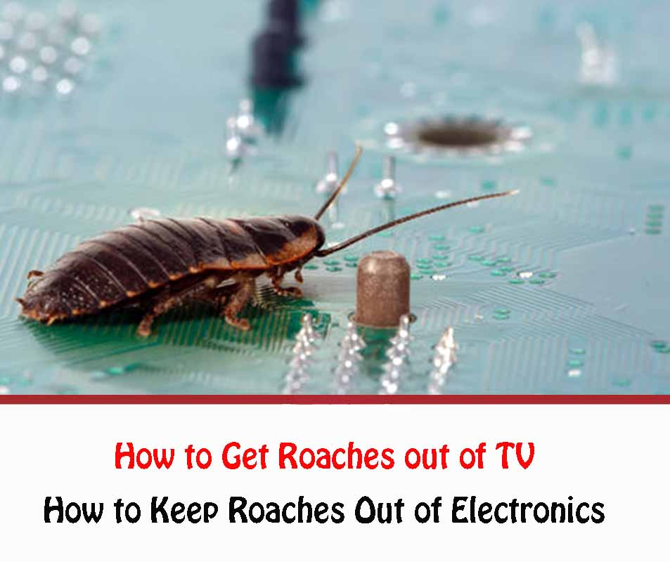 How to Get Roaches out of TV