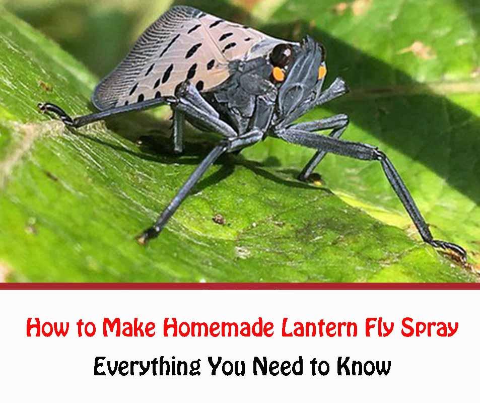 How to Make Homemade Lantern Fly Spray