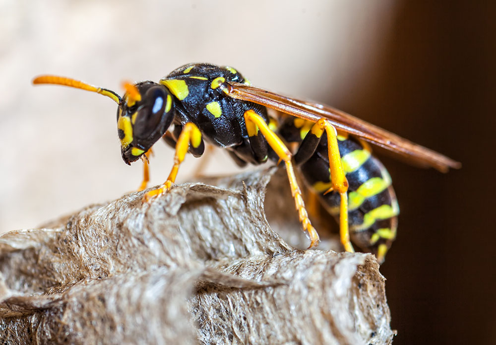 Is it Possible to Outrun a Wasp