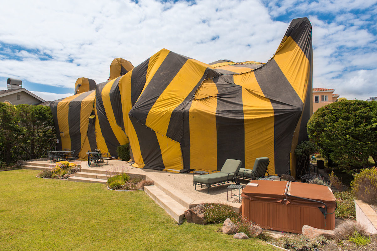Termite Fumigation Side Effects