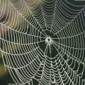 Where Do Cobwebs Come From