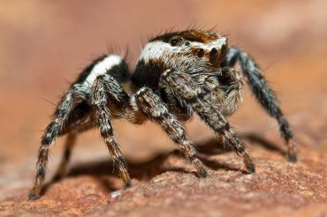 How To Get Rid Of Spider Webs Outside Naturally