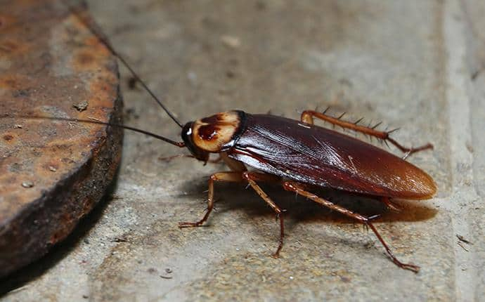 Why Do These Animals Eat Cockroaches
