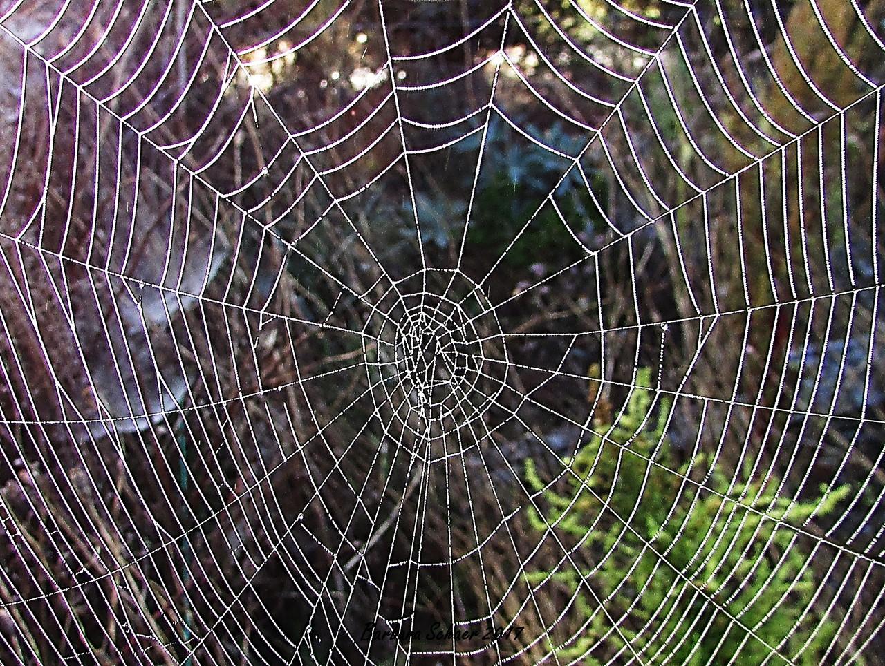 Why Do You Have So Many Cobwebs