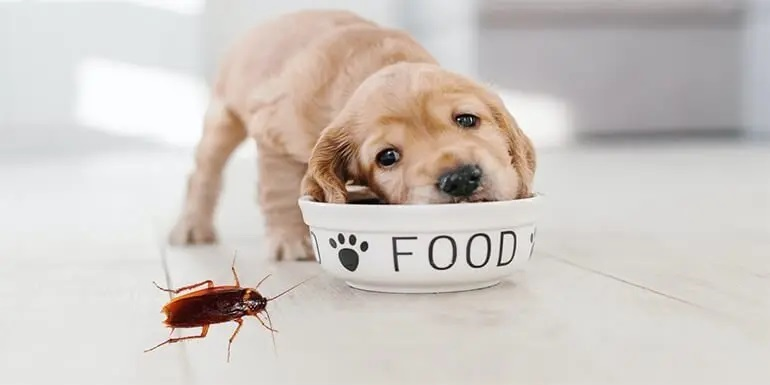 Why Does Your Dog Food Have Roaches