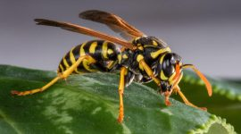 How to Get Rid of Ground Hornets Naturally