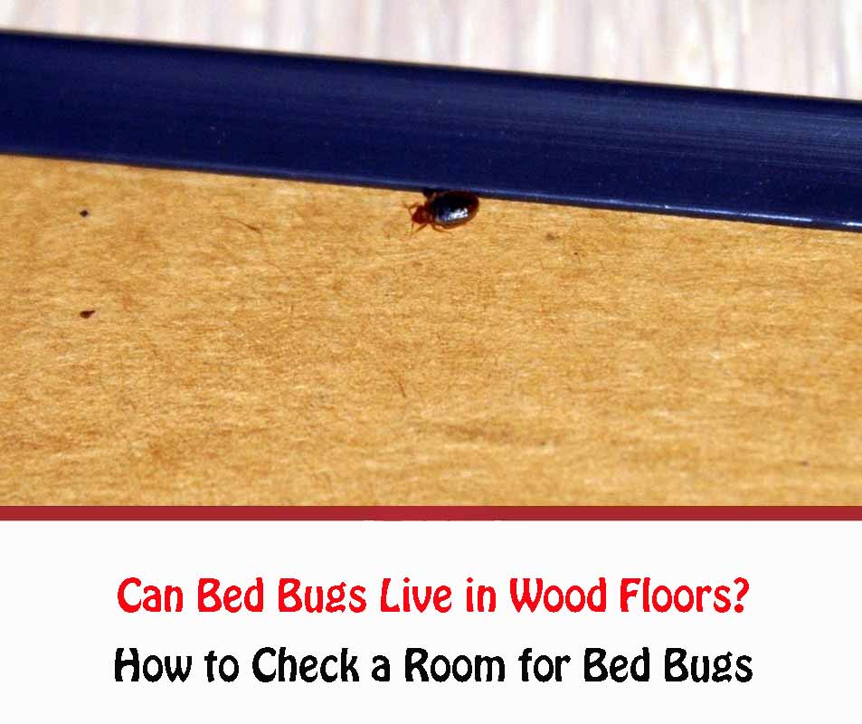 Can Bed Bugs Live in Wood Floors