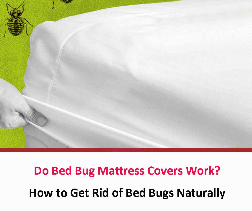 Do Bed Bug Mattress Covers Work?