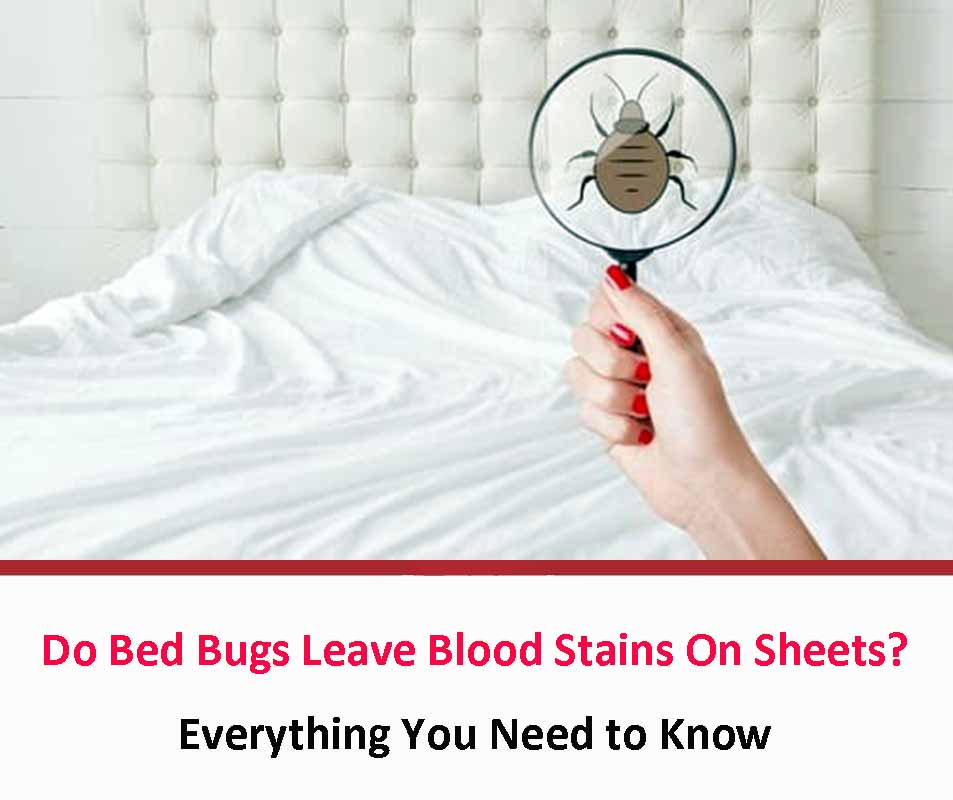 Do Bed Bugs Leave Blood Stains On Sheets