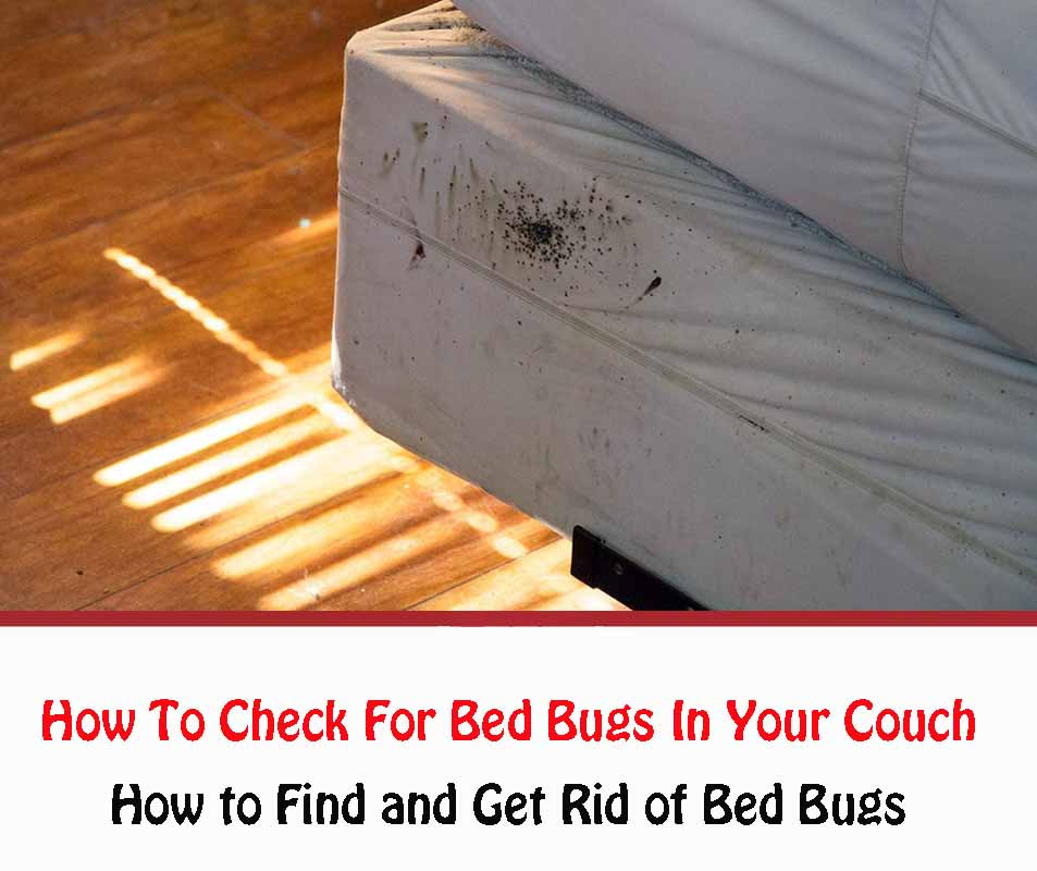 How To Check For Bed Bugs In Your Couch