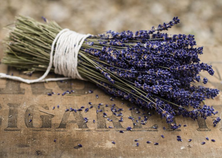How To Get Rid Of Moths On Carpets With Lavender