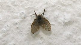 How To Get Rid Of Small Black Flies In Bathroom
