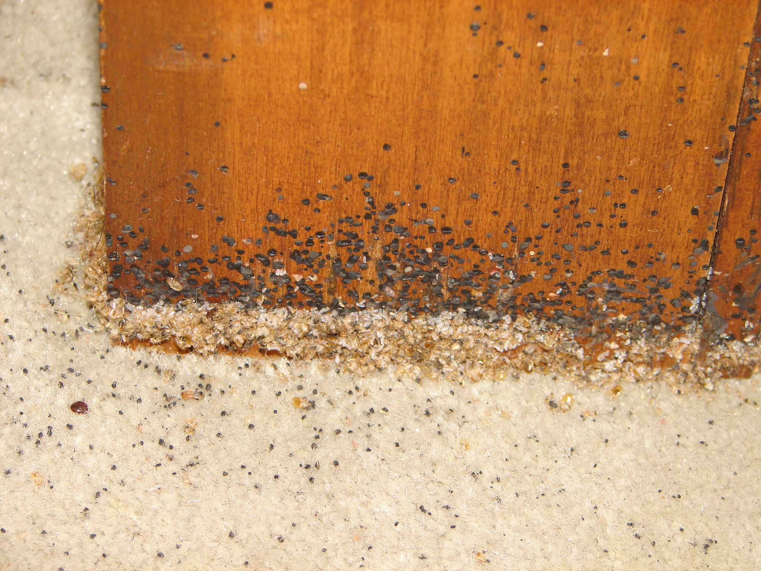 How to Prevent Bed Bugs From Entering Wood Floor
