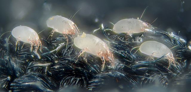 How to Remove Dust Mites