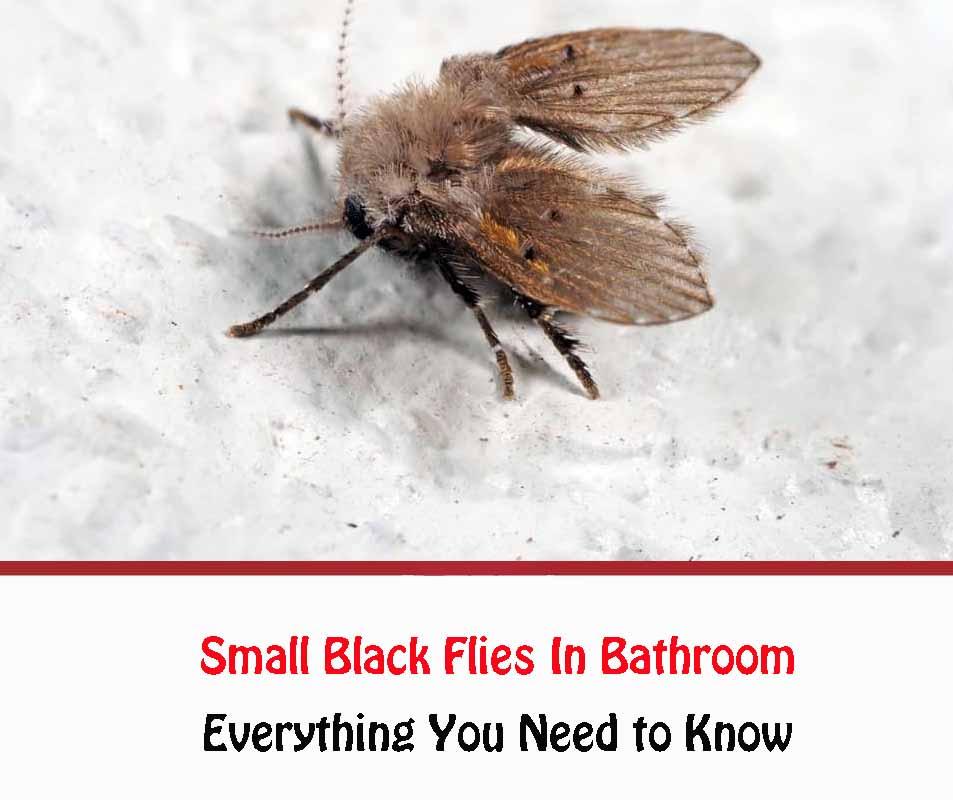 Small Black Flies In Bathroom