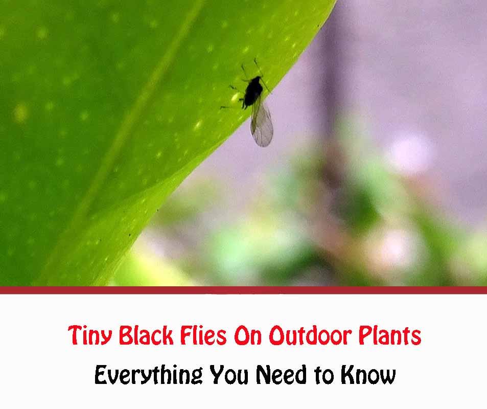 Tiny Black Flies On Outdoor Plants