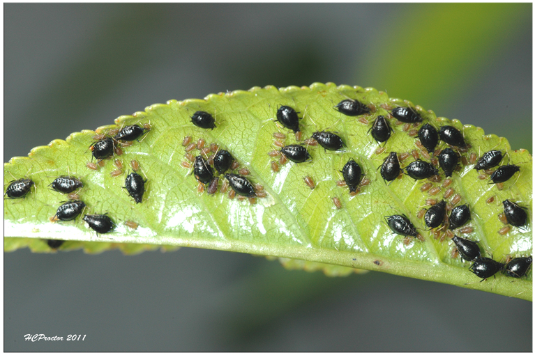 What Are Tiny Black Flies On Outdoor Plants