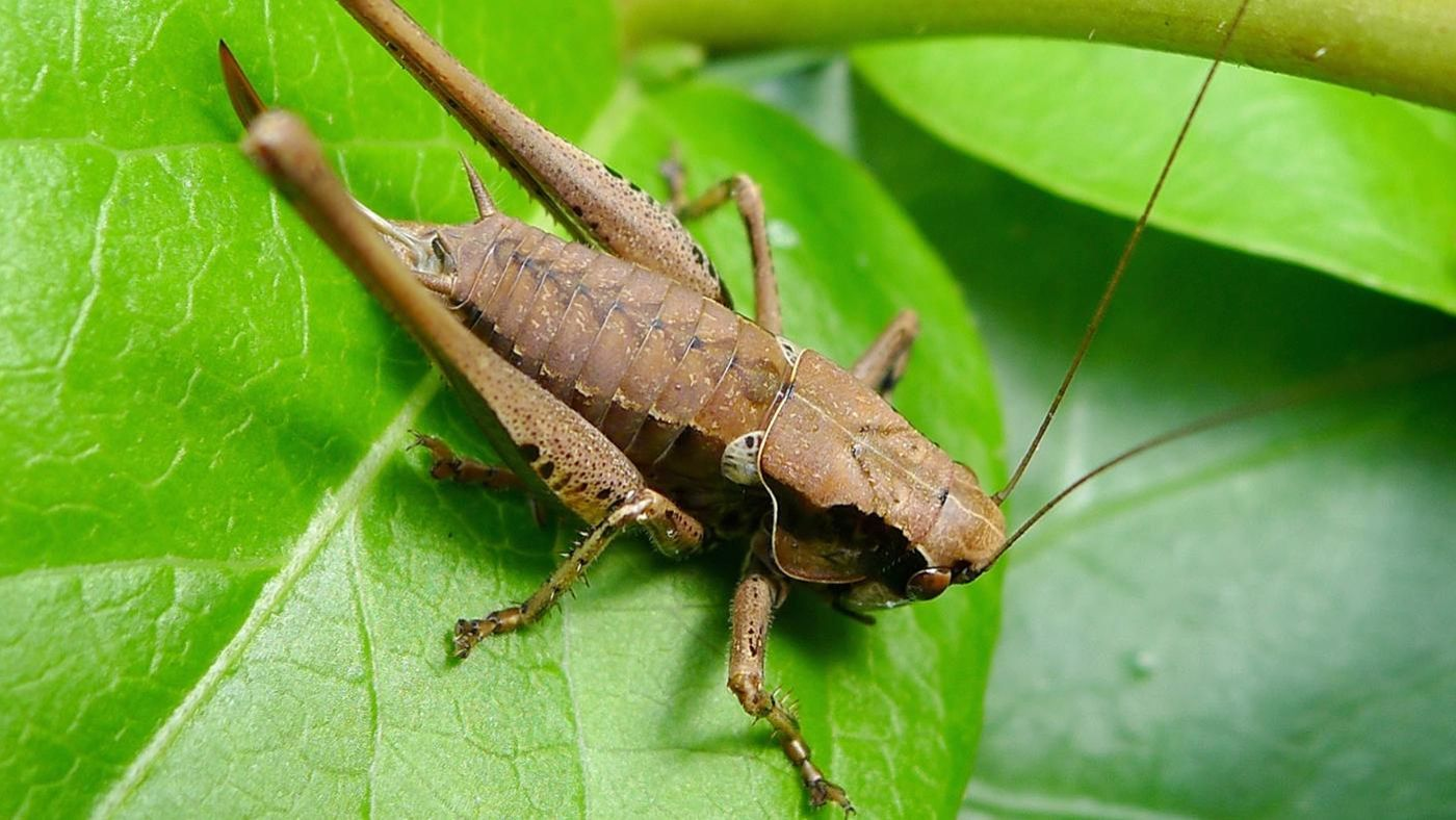 What Do Crickets Eat the Most
