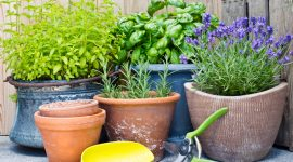 Are There Any Plant That Repel Bed Bugs?