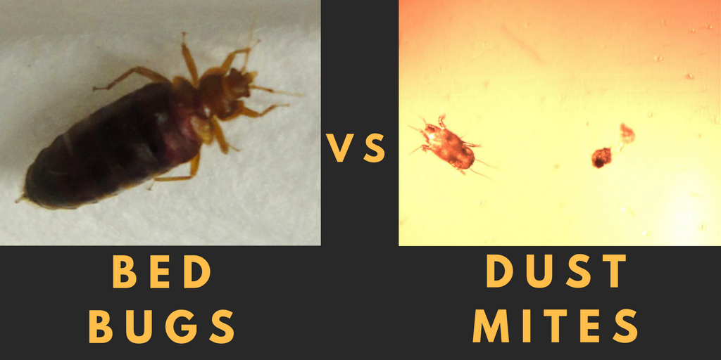 Difference Between Bed Bugs And Mites
