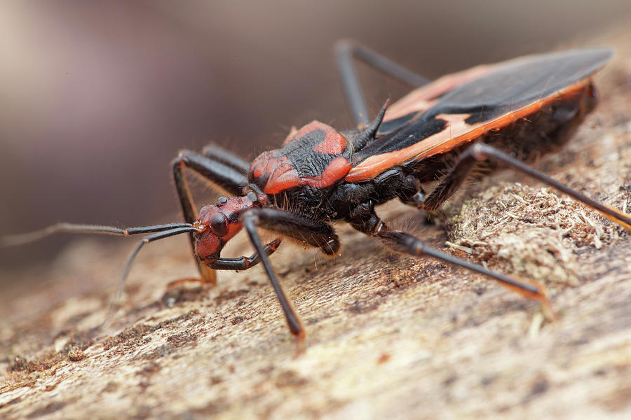 How To Prevent Assassin Bugs From Reinvesting Your Property