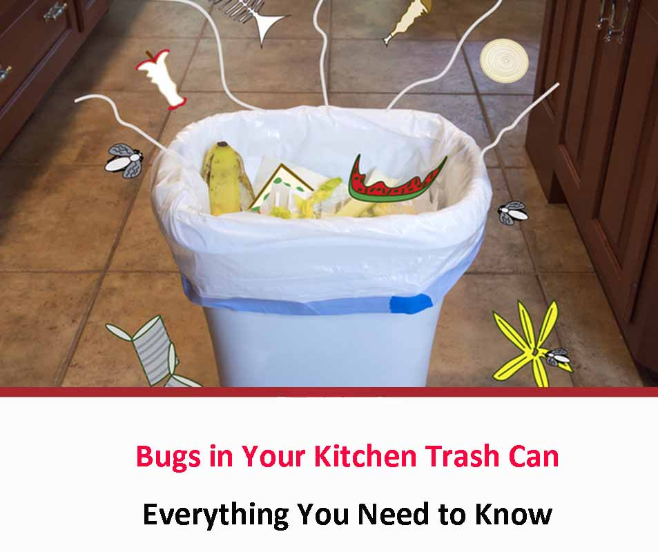 Bugs in Your Kitchen Trash Can 2021